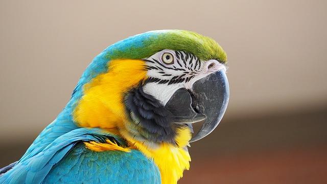 ブラジル・中南米専門旅行会社のウニベルツールが事業停止
