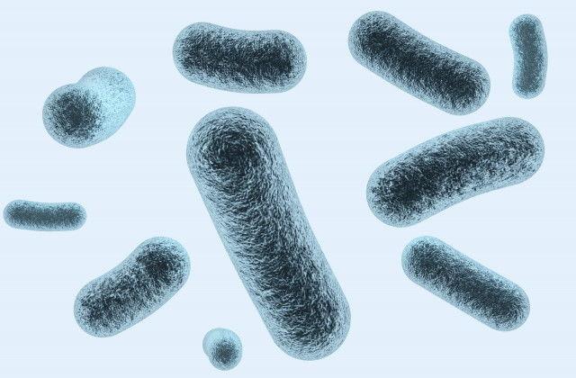 ビフィズス菌が新型コロナの感染を防ぐ「新ワクチン」の仕組みとは