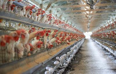 日和産業にみる国内畜産農家減少と業界再編の動き