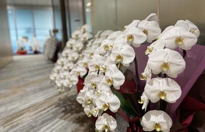 新しいオフィスに「胡蝶蘭」が贈られる三つの理由